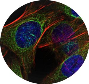 Immunofluorescence